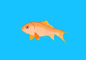 10,1 GoldfishGrnd